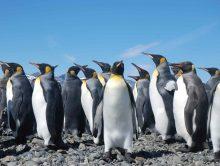 É possível um pinguim morrer de frio?